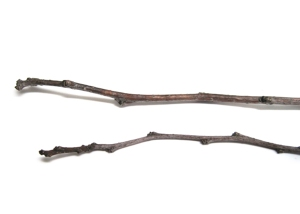two_twigs